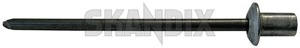Rivet, Trim moulding 988110 (1029204) - Volvo S60 (2011-2018), S80 (2007-), V60 (2011-2018), V70 XC70 (2008-), XC60 (-2017) - rivet trim moulding Genuine bpillar b pillar cpillar c pillar door trim
